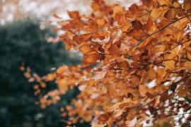 Autumn Weather Forecast