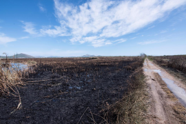 Albufera fire is extinguished