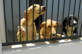 Palma animal centre taking in fewer dogs