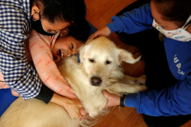 Wagging tails therapy dog cheers Spanish special-needs kids during COVID