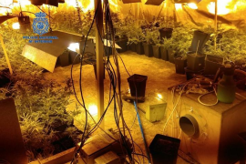 Woman arrested for having a marijuana plantation