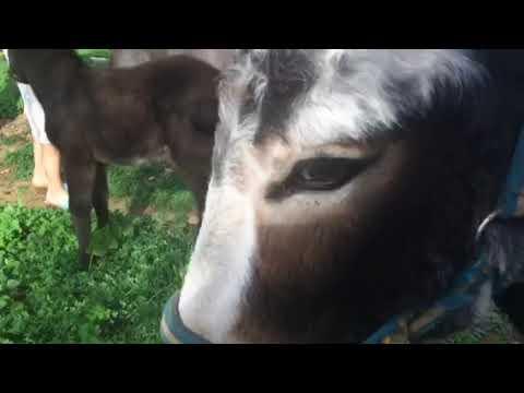 Lovely Donkey Phillip