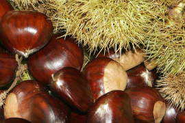 Chestnuts: sweet and the savoury