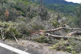 Tramuntana municipalities still waiting for disaster zone response