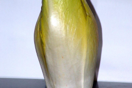 Cultivated endive (Cichorium endivis) is a relatively recent vegetable