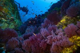 Economics and Marine Biodiversity