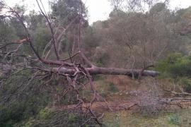 Anger over abandoned state of storm damaged Bellver Woods