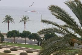 Dramatic rescue in Portixol