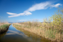 Albufera Nature Park to expand by almost a quarter