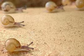 Snail farming in Mallorca