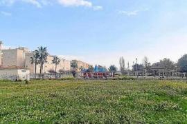 Palma to get 4 new Nursery Schools