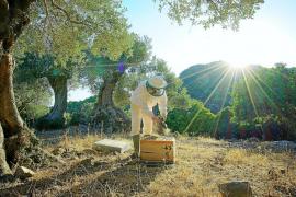 Sweet success for Mallorcan beekeeper