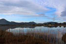 Albufera recovering after the devastating fire