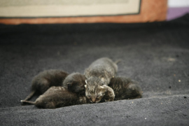 Animal-rights party accuses town halls of wanting to end cat colonies