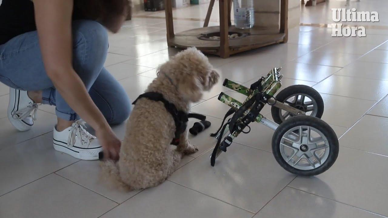 Mallorcan couple say disabled dog changed their lives