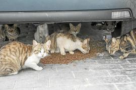 Residents' complaints about Manacor cat colonies