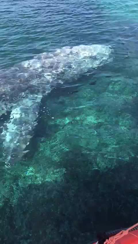 🐋 Whale in Santa Ponsa, Mallorca. https://t.co/KAoP8nBJOh