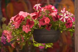 Gardening in Mallorca: Growing in abundance