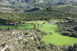 Populations of Mallorca's municipalities keep on growing