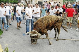 PSOE under pressure over Fornalutx bull-run ban