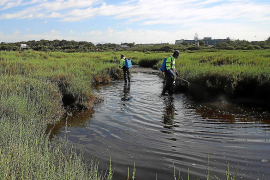 Preventing mosquito reproduction in Playa de Palma wetland