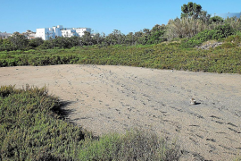 Dry wetland of Ses Fontanelles in Palma Mallorca
