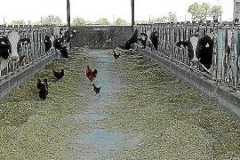 Farmers begin tackling Balearic drought