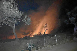 Suspended sentence for having caused Soller forest fire