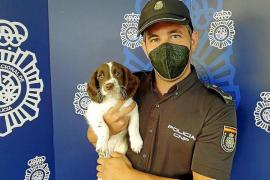 A super-cute new colleague for the National Police