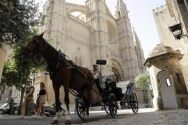 Horses pulling carriages in searing heat in Palma