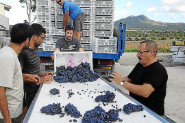 Wine producers forecasting an excellent harvest