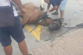 New call for an end to horse carriages following Alcudia accident