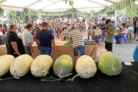 Mallorca's fairs making a return