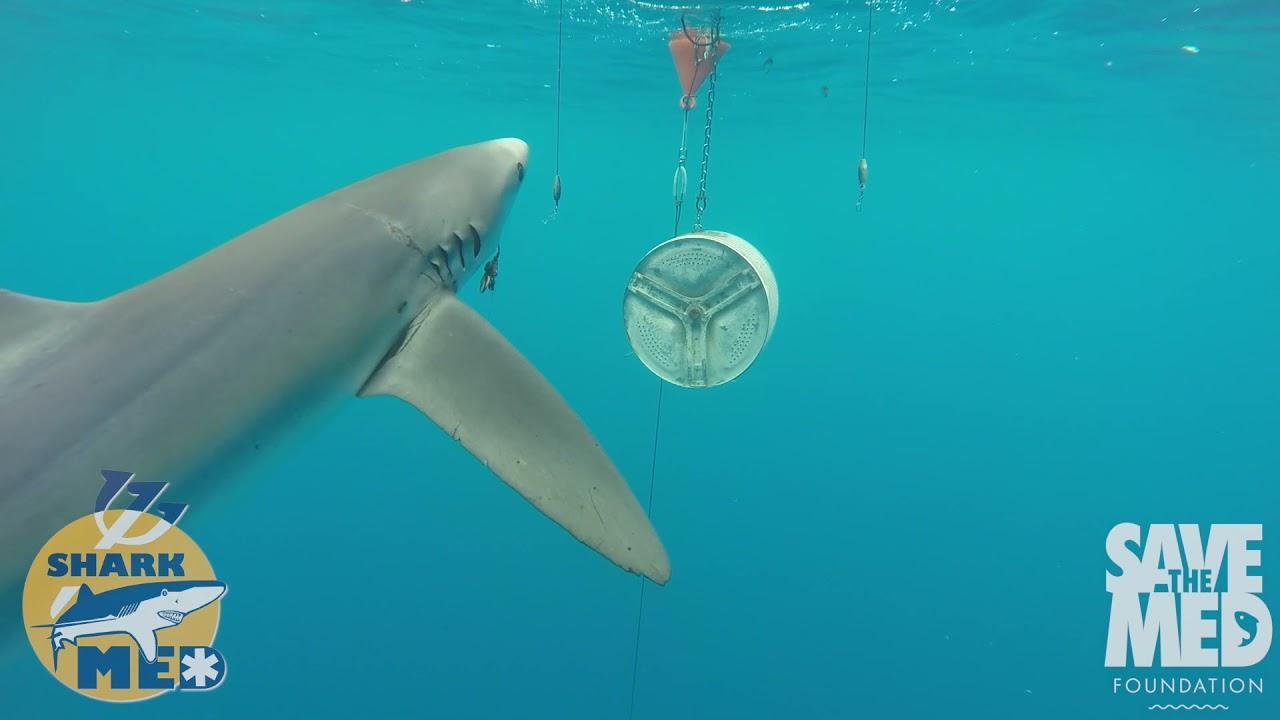 Amazing underwater Mallorca