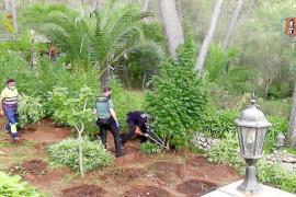 Palma court throws out drug case