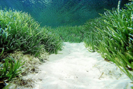 Government wants sea grass included on nautical charts