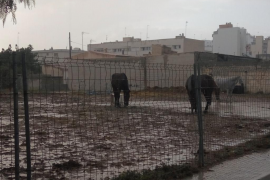 Animal rights party attacks Palma horses' living conditions