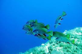 Marine life under the Balearic waters