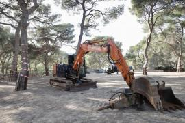 Outrage over trees felled in Bellver Forest