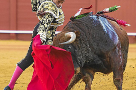 Government will respect legality in bullfighting legislation