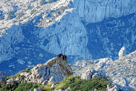 Concern over effect of tourist pressure on Tramuntana wildlife