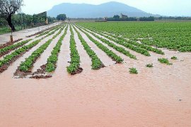Crops could be ruined by floods