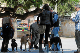 Police in Palma checking that dog owners comply with bylaws