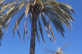 A sunny Friday in Palma