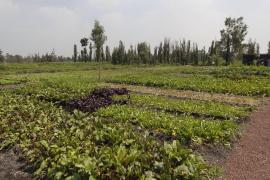 Agroculture