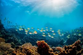 Palma Aquarium, Mallorca
