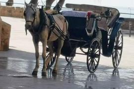 Horse-drawn carriage in Palma, Mallorca