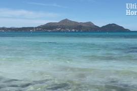 A fin is spotted near the beach in Playa de Muro