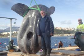 Marine biologist Enrique Ostale could not believe his eyes when he saw the enormous sunfish.
