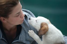 Dog ownership in Mallorca